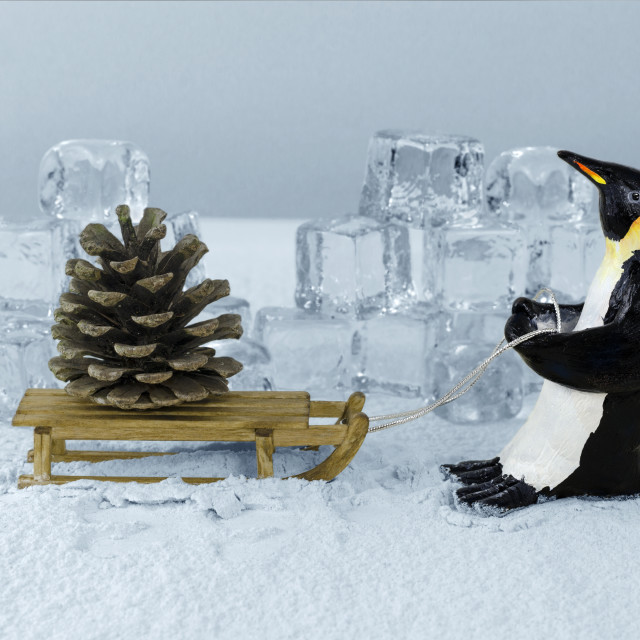 """Penguin and fir cone"" stock image"