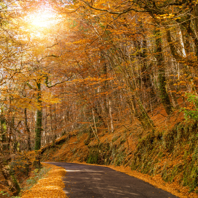"""""""Autumn, Geres, Portugal"""" stock image"""