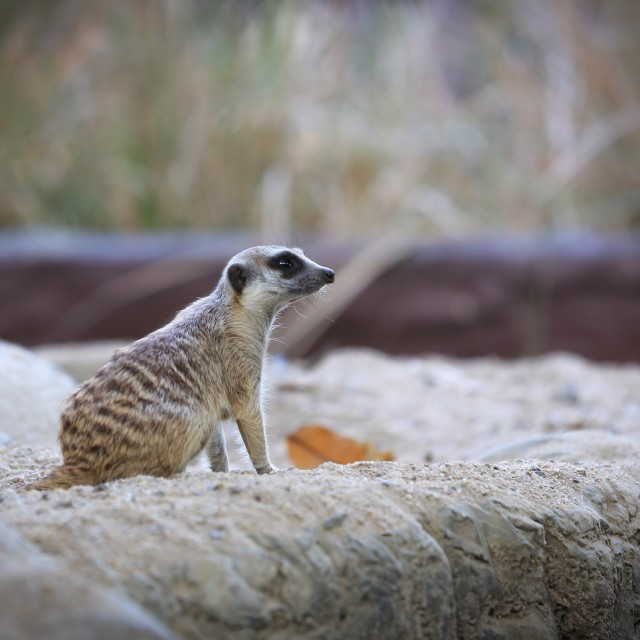 """""""Animal in the Zoo"""" stock image"""