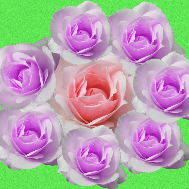 """""""Rose circle"""" stock image"""