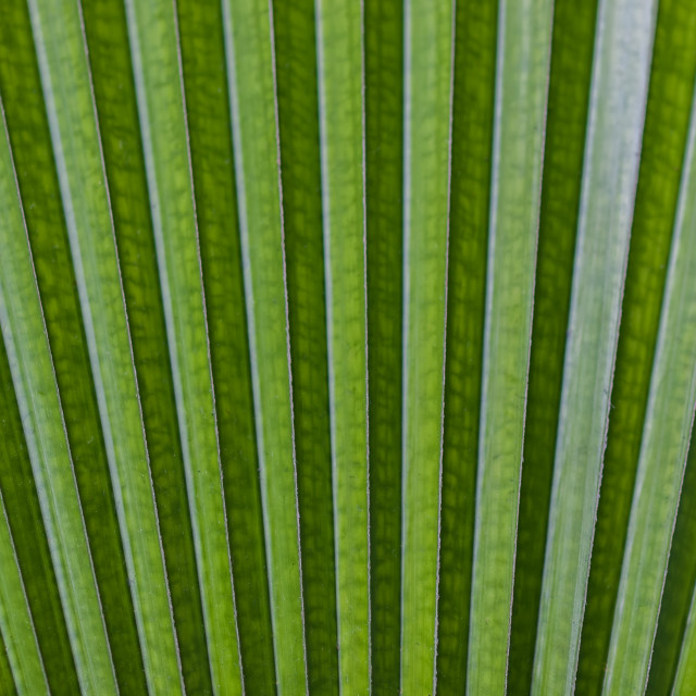 """Green Leaf"" stock image"