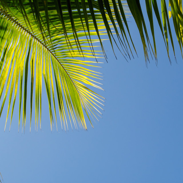 """""""Palm Branch with blue sky"""" stock image"""