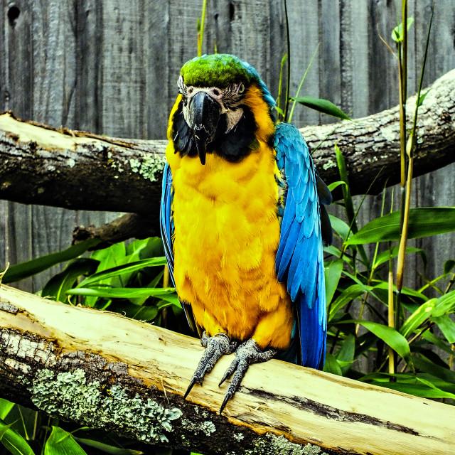 """Pretty Polly"" stock image"