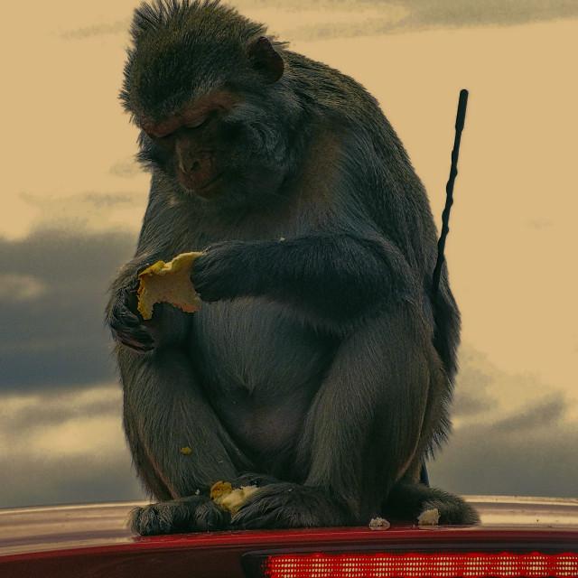 """""""Radio Controlled Monkey"""" stock image"""