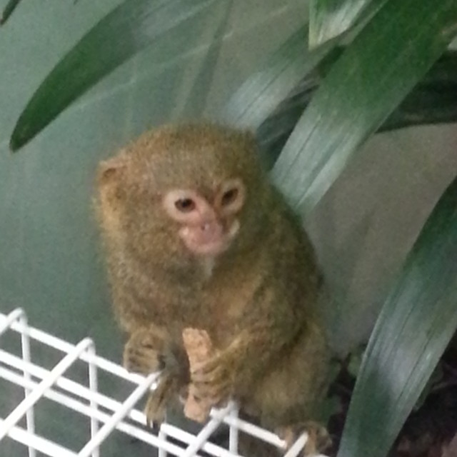 """little monkey"" stock image"