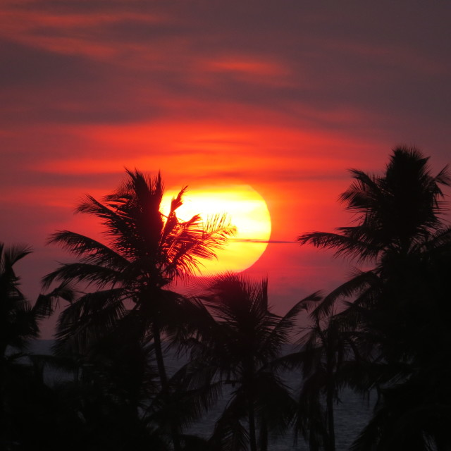 """Sunset in Kerala"" stock image"