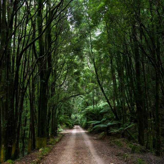 """Road through rainforest"" stock image"