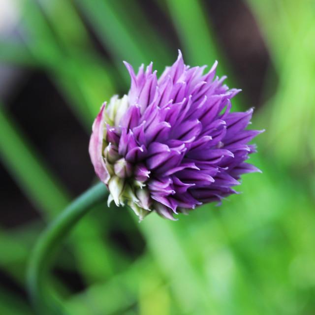 """Purple Flower 2"" stock image"