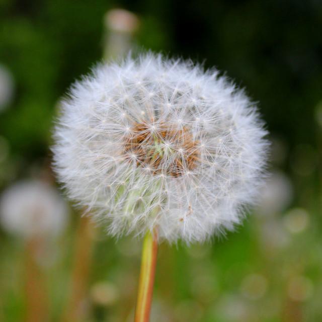 """Make a wish."" stock image"