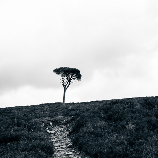 """Lone tree black and white"" stock image"