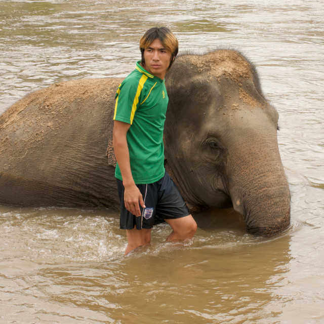 """Elephant and mahout"" stock image"