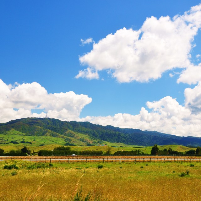 """""""Central Hawkes Bay"""" stock image"""