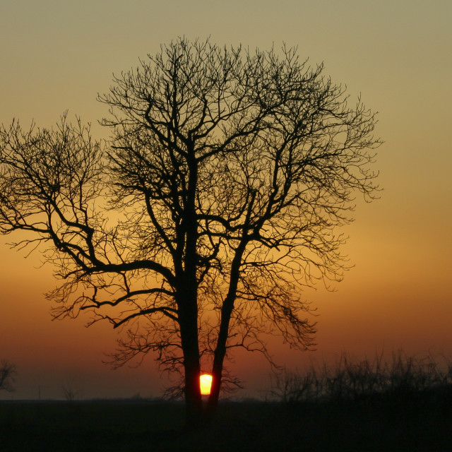 """Single Tree with setting Sun behind"" stock image"