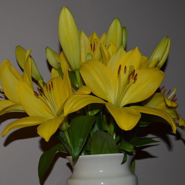"""Lillies in Vase"" stock image"