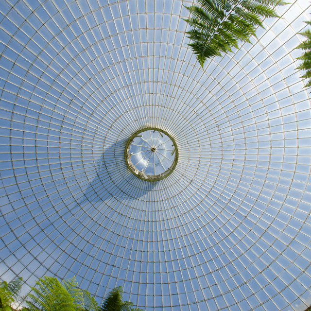 """Kibble Palace Roof"" stock image"
