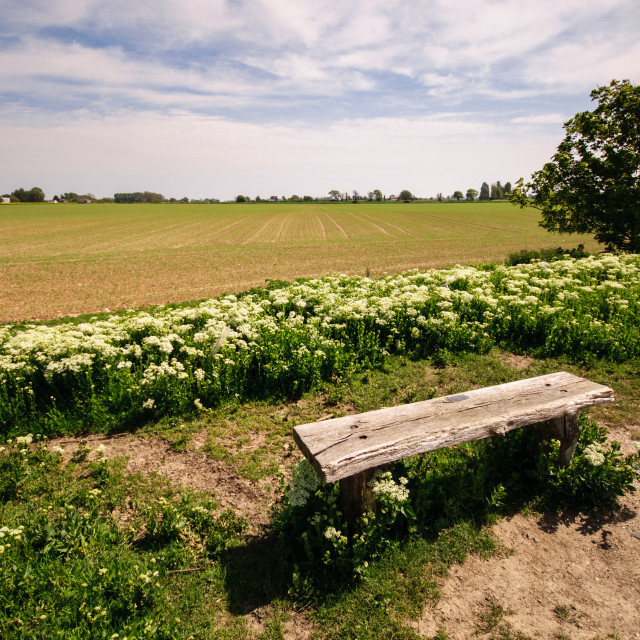 """Lonesome bench"" stock image"