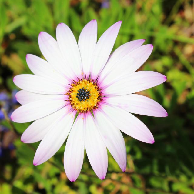 """Flower face"" stock image"