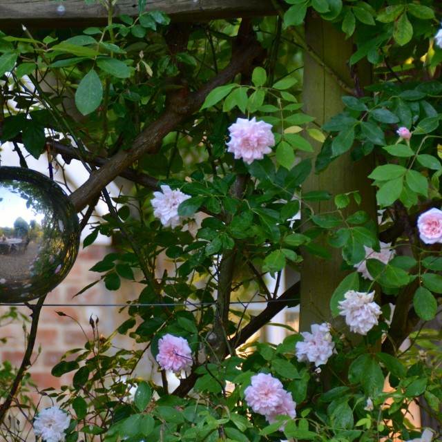 """Garden ornament"" stock image"