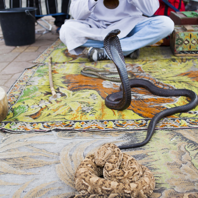 """""""Snake Handler"""" stock image"""