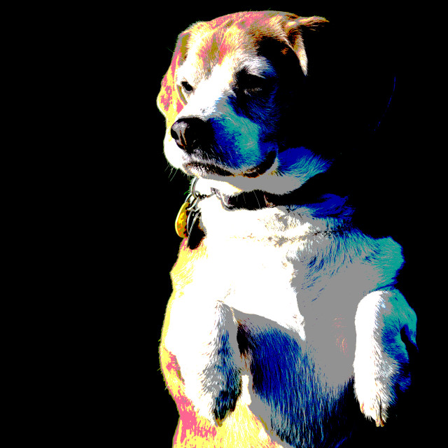 """Posterized Beagle 1"" stock image"