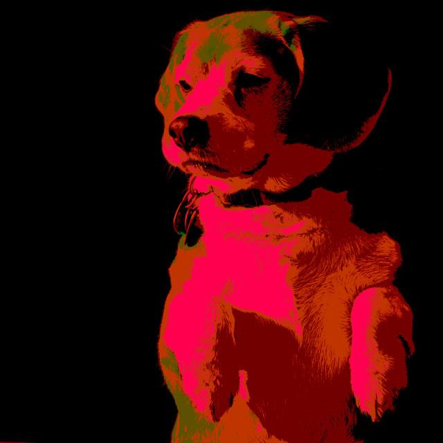 """Posterized Beagle #4 port side"" stock image"