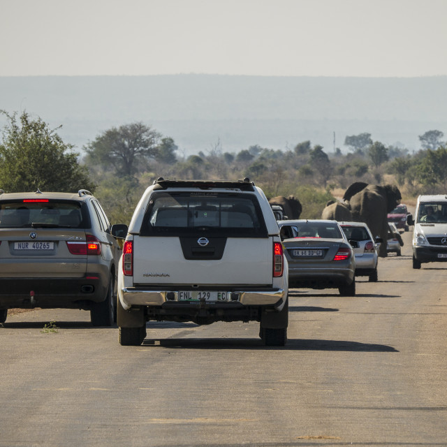 """""""Trouble With Tourism: An Elephant Roadblock in Kruger National Park, South Africa"""" stock image"""