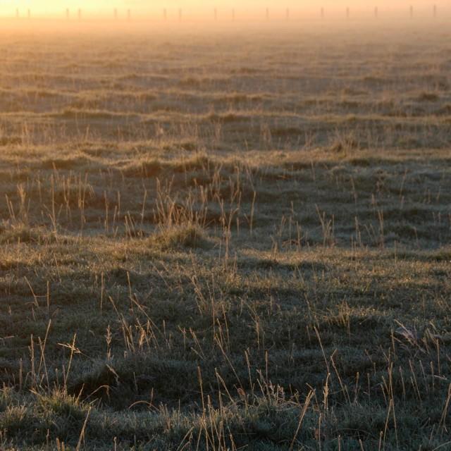 """foggy grass"" stock image"