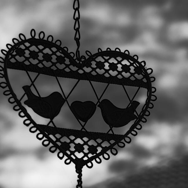 """The Lovebirds"" stock image"