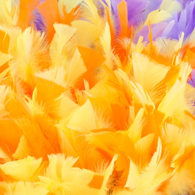 """Yellow feathers"" stock image"