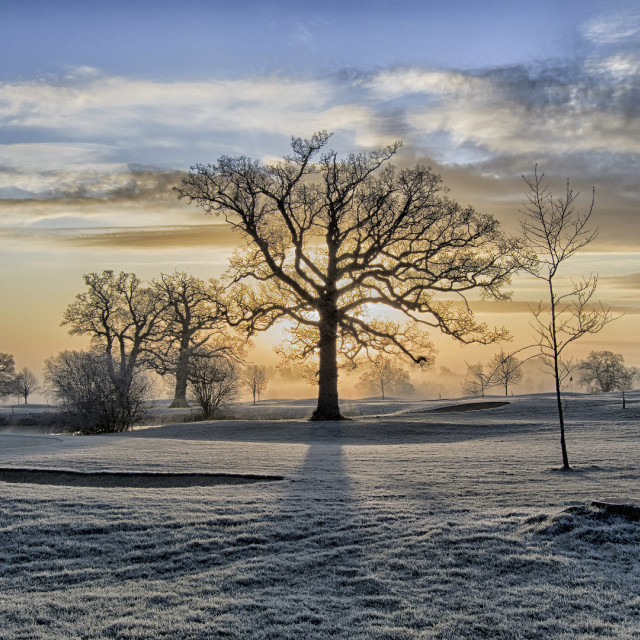 """""""Frost morning"""" stock image"""