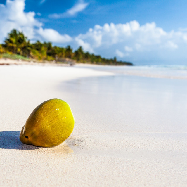 """Coconut on beach"" stock image"