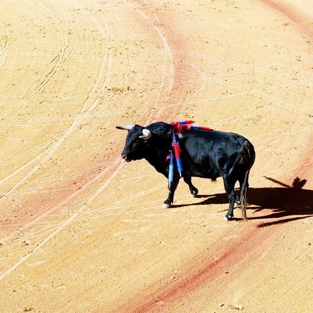 """Bullfighting Spain"" stock image"