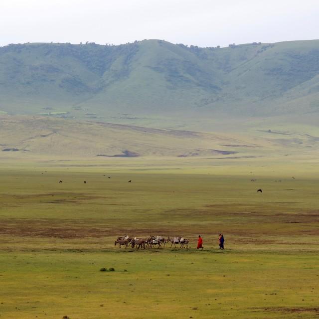 """""""Malanga Depression Ngorongoro"""" stock image"""
