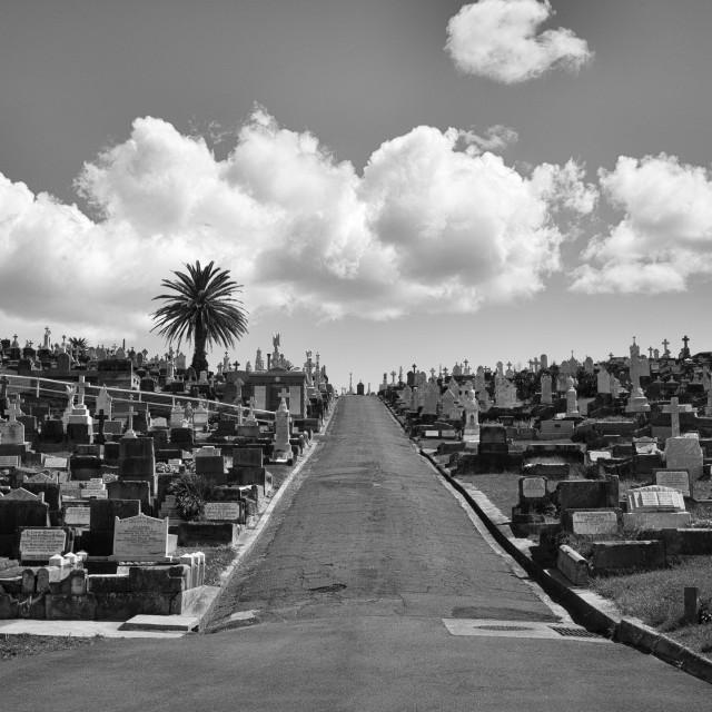 """Bondi Graveyard"" stock image"