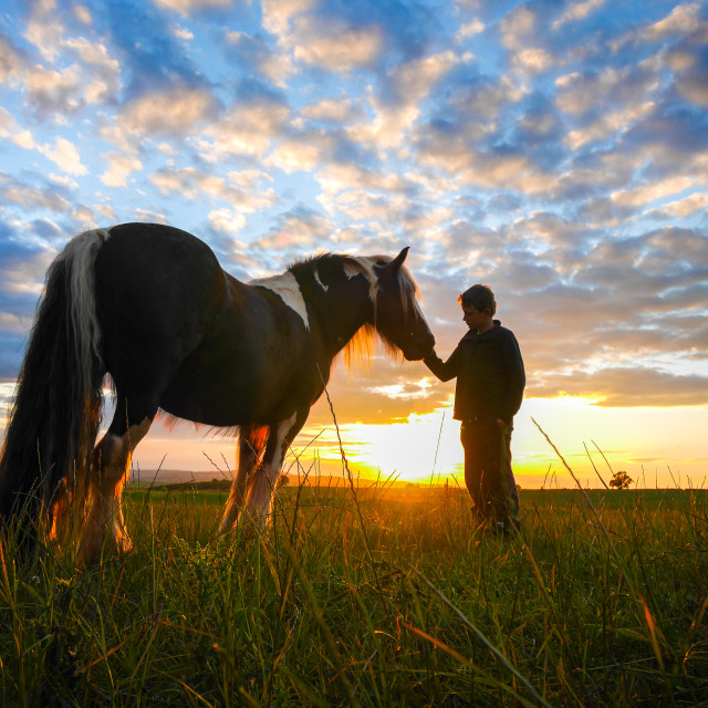 """Horse and Boy: making friends"" stock image"