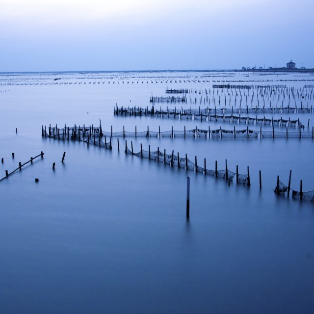 """Oyster field"" stock image"