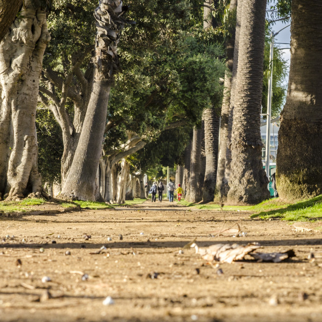 """Summer walk - Santa Monica, California"" stock image"