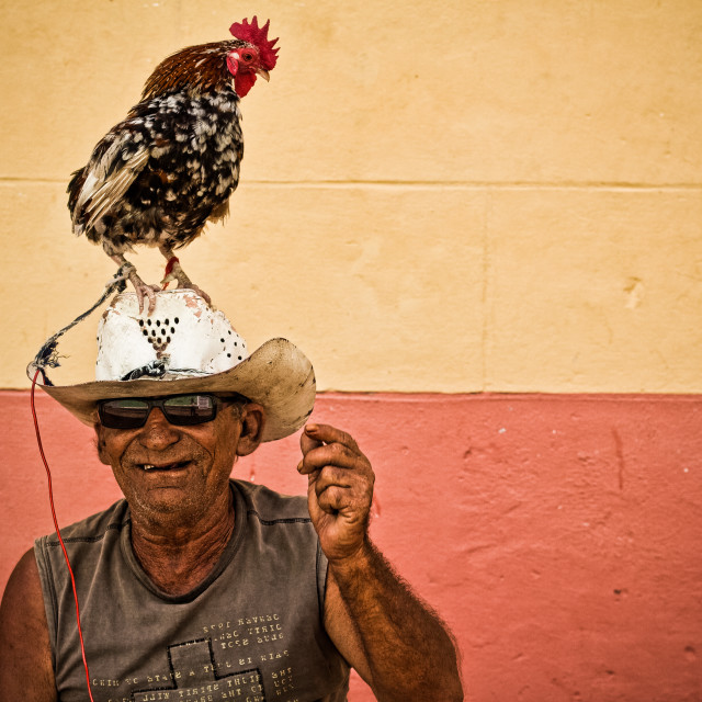 """Chicken hat"" stock image"