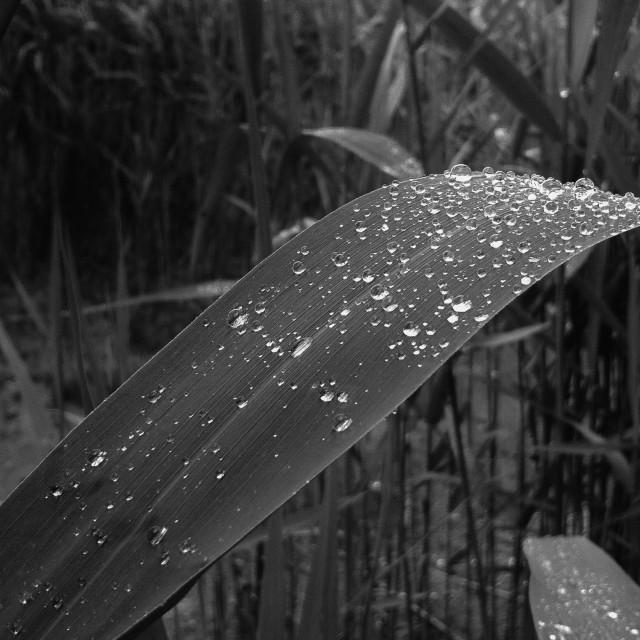 """Raindrops"" stock image"