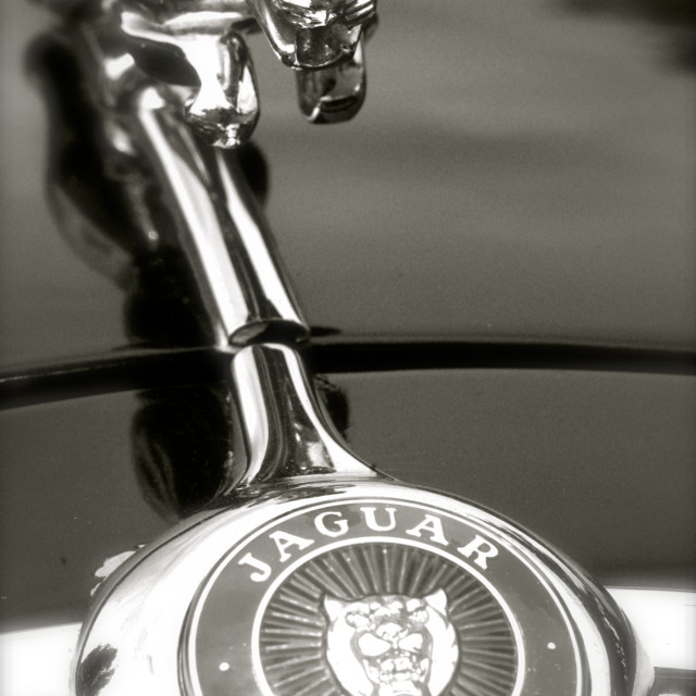 """Mark 1 3.4 Litre Jaguar Hood Emblem"" stock image"