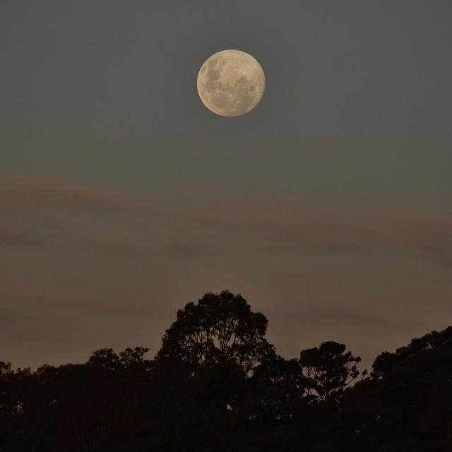 """Rising Full Moon"" stock image"