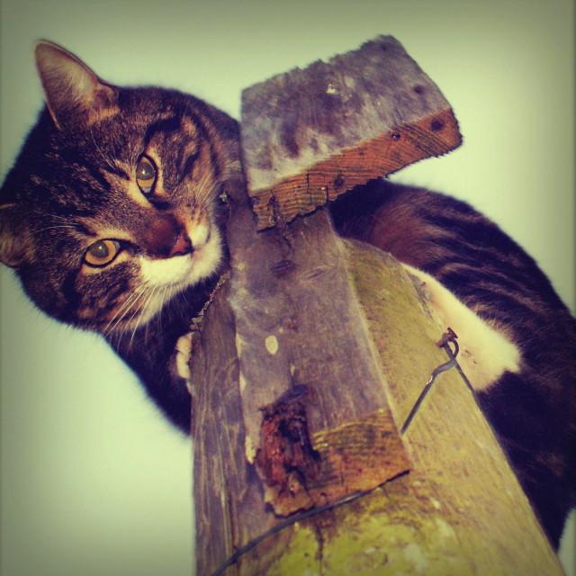 """""""Zebadee the cat"""" stock image"""