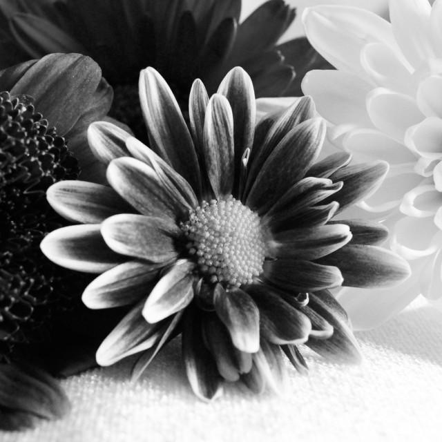 """Trio black & White"" stock image"