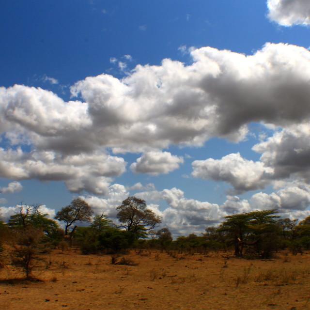 """AFRICAN BUSH TANZANIA"" stock image"