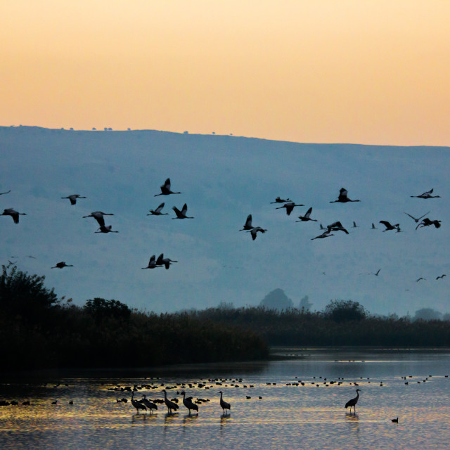 """Sunrise at Hula Valley"" stock image"