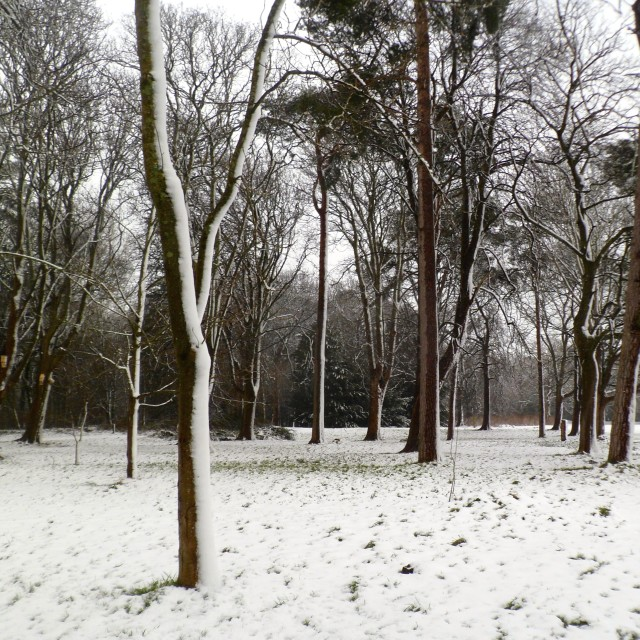 """Bute Park in winter"" stock image"