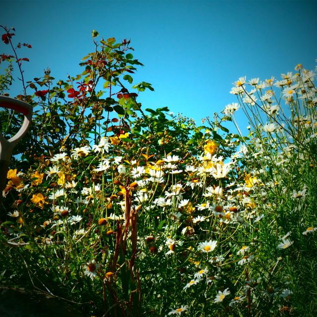 """""""Our garden"""" stock image"""