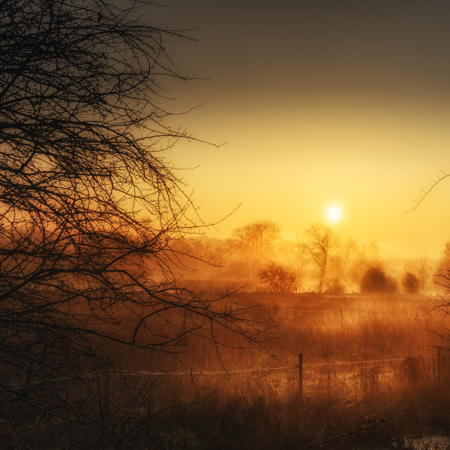 """Golden Morning"" stock image"