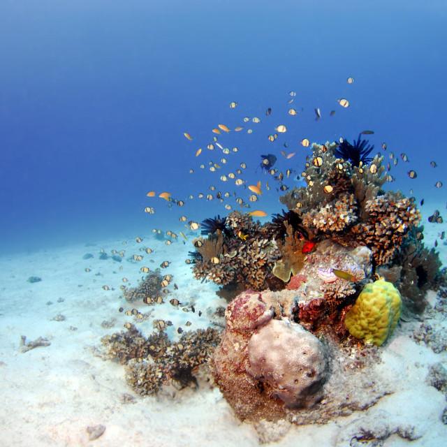 """Underwater Oasis"" stock image"