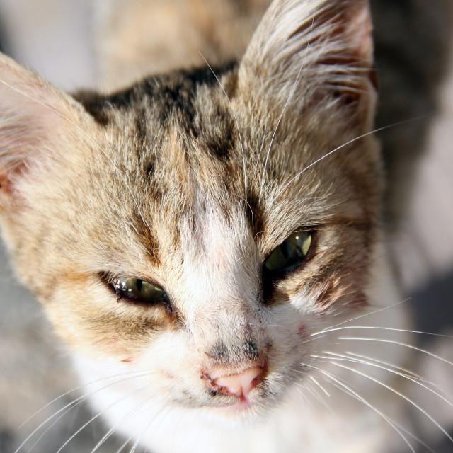 """Kitty Cat"" stock image"